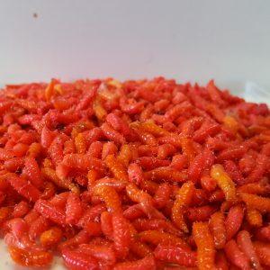bigattino colorato arancio fluo